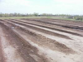 Rows of Compost